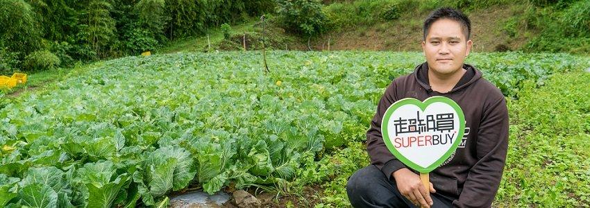 高山有機高麗菜 米露農場