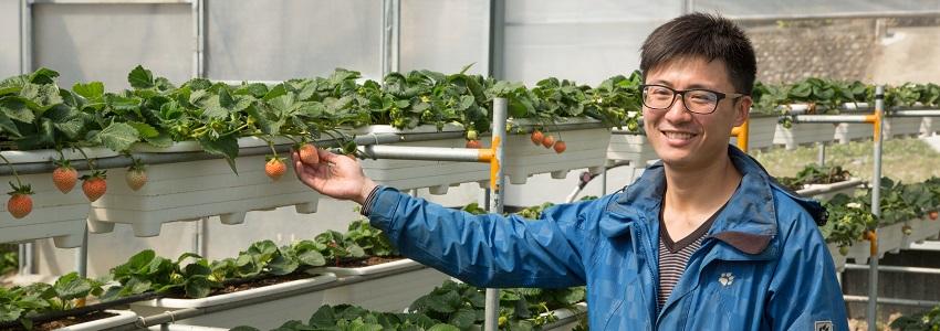 竹青亭有機草莓|產地影片
