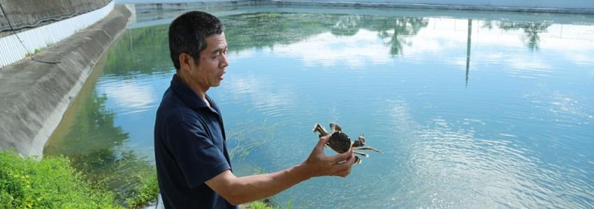 台東冷泉養殖大閘蟹|產地影音