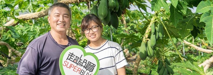 阿華老媽與老爹的木瓜|小農故事