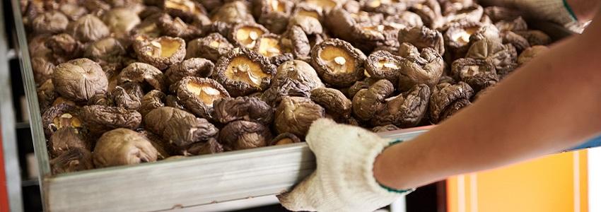 鄉菇香有機乾冬菇 | 產地影音