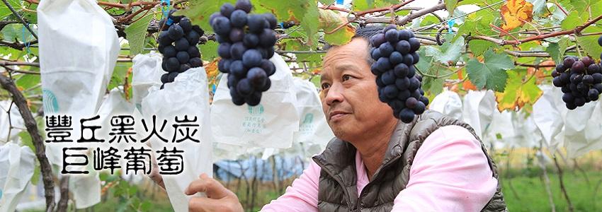黑火炭葡萄 | 產地影片