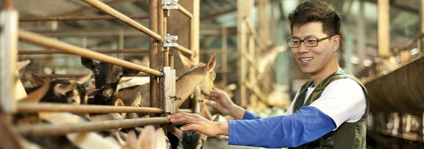 羊舍鮮羊乳 | 小農故事